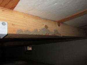 床下木材が蟻害を受けた跡