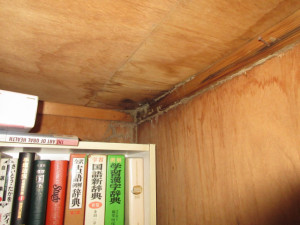 雨漏りが原因で収納内部まで蟻害が進行した状態