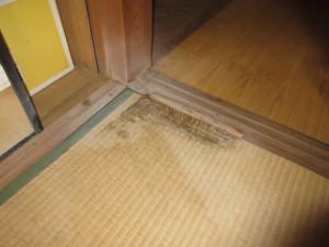 畳まで蟻害を受けた状態